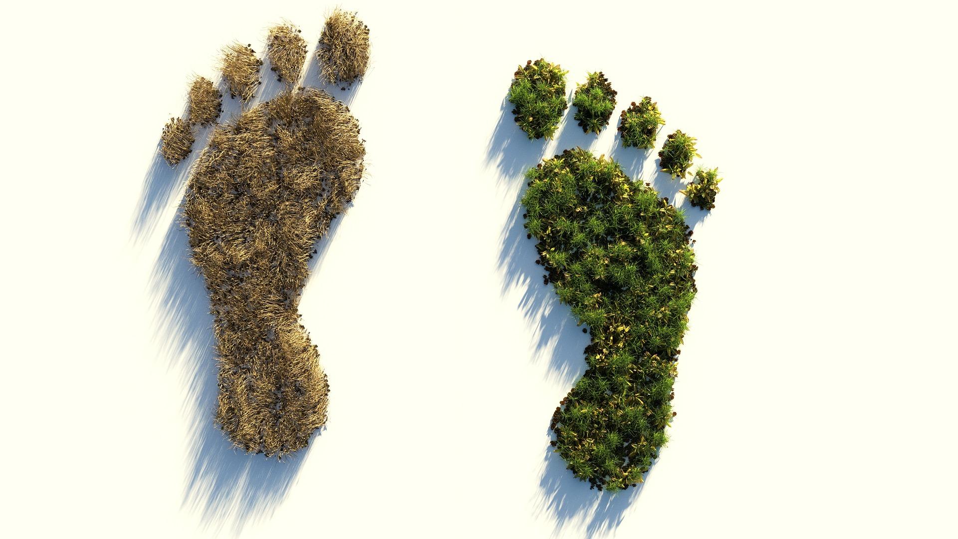 Nuestra aportación al Planeta